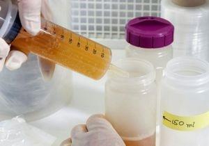 У найстарішому в світі пиві виявили живі бактерії