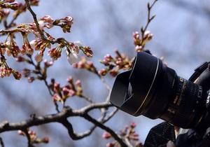 Алея сакур у столичному парку Кіото потрапила у Книгу рекордів України