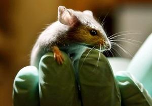 Пересадка клітин сітківки повернула зір мишам