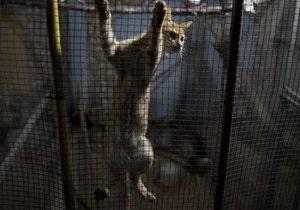 Мешканка Німеччини возз єднається зі своїм котом, який зник 16 років тому