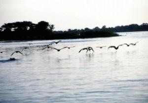 В Конго, возвращаясь с матча, в реке утонули 20 футболистов
