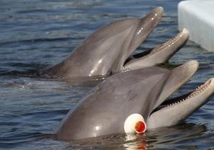 В Азовському морі у кризі застрягли понад 50 дельфінів