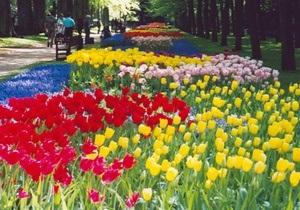У квітах з Нідерландів на українській митниці знайшли небезпечний вірус