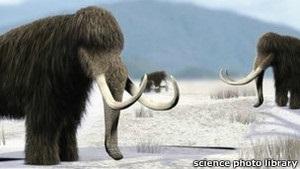 Вчені з Росії та Південної Кореї хочуть клонувати мамонтів