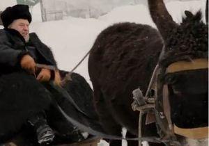 Власник ферми у Криму вимагає від Жириновського вибачитися за знущання над віслюком