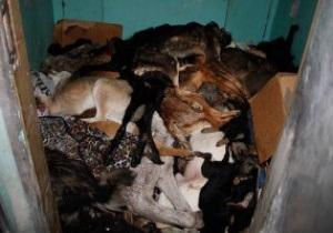 PETA: Из-за Евро-2012 в Украине продолжают убивать бездомных собак
