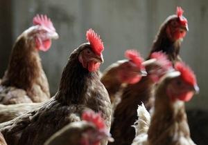 Крупнейший украинский производитель курятины увеличил продажи на 13%