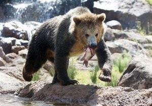 У Карпатах ведмідь напав на чоловіка