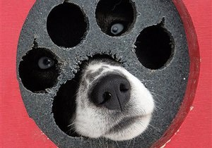 Співробітники Київводоканалу витягли з водопровідного люка собаку