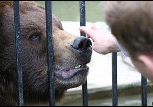 Українська служба Бі-бі-сі:  Ресторанні ведмеді  в Карпатах - гримуча суміш?