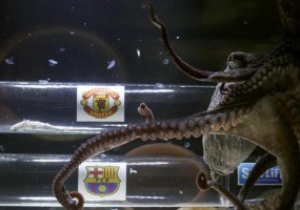 Финал Лиги Чемпионов: Под шупальцами осьминога