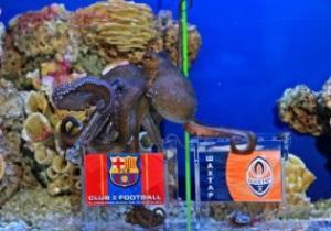 Болельщики Шахтера хотят поджарить осьминога-оракула Павлика