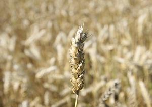Мировой гигант выкупит украинские программы селекции пшеницы