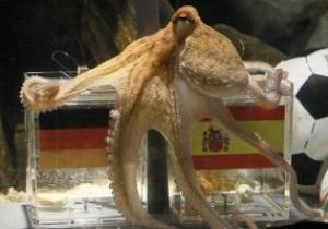 Сегодня представят осьминога Пауля Второго