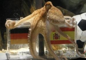 В Оберхаузене хотят надругаться над останками осьминога Пауля