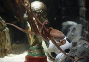 Питерский осьминог Григорий предсказал поражение сборной России от Андорры
