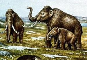 Люди не винні ... у вимиранні мамонтів
