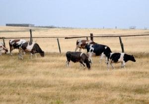 FT: Пшениця дорожчає через спеку в Росії