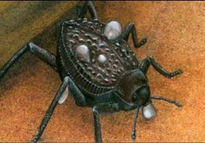Геніальний жук учить людей добувати питну воду