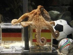 William Hill: Шансы осьминога Пола угадать победителя ЧМ-2010 - 50 %