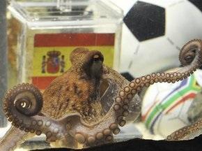 Испанские министры готовы защищать осьминога-провидца