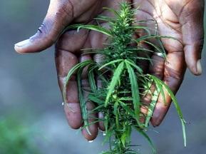 Вратаря голландской команды обвинили в выращивании марихуаны