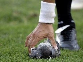 Птичку жалко: матч аргентинских команд отметился убийством голубя
