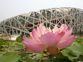 Открыта официальная клумба Олимпиады