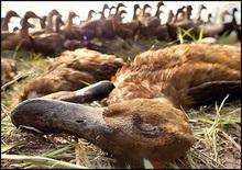 Україна заборонила імпорт польської птиці