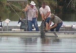 В США трехметровый аллигатор откусил руку подростку