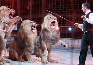 Десять львов из украинского цирка могут погибнуть от переохлаждения на границе России и Латвии