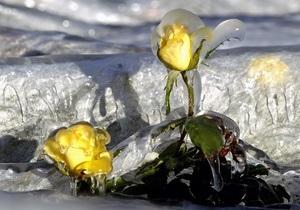 Выставка ледяных скульптур в Киеве пройдет при плюсовой температуре