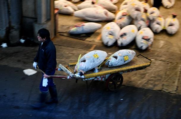 ВТокио закрыли крупнейший вмире рынок морепродуктов