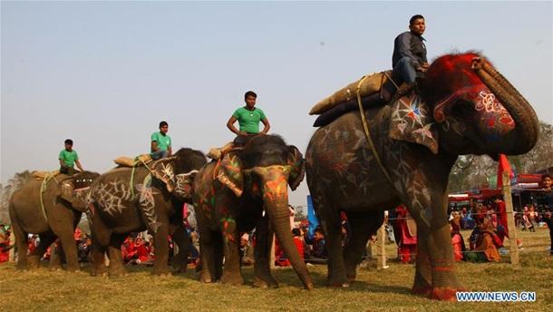 В Непале провели конкурс красоты среди слонов