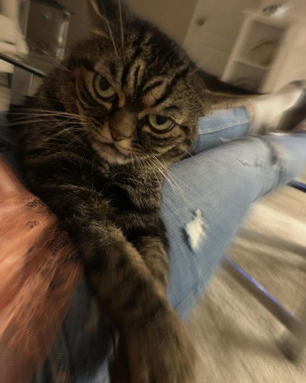 Угрюмая кошка стала звездой сети. ФОТО