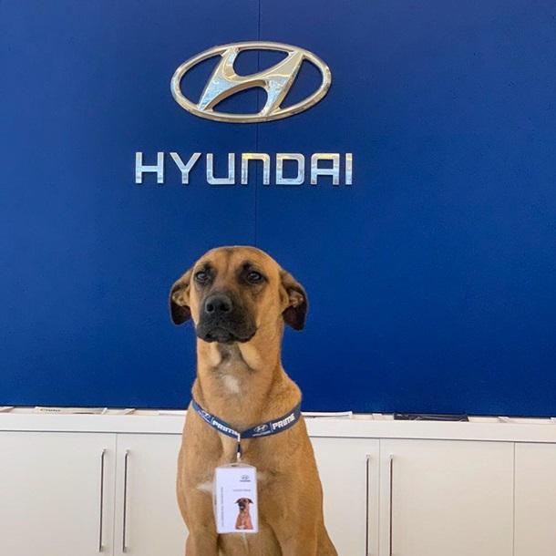 Бездомную собаку приняли на работу в автосалон. ФОТО