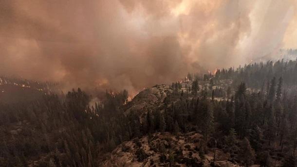 В Калифорнии горят реликтовые секвойи - их пытаются спасти огнеупорными одеялами (ФОТО) 15