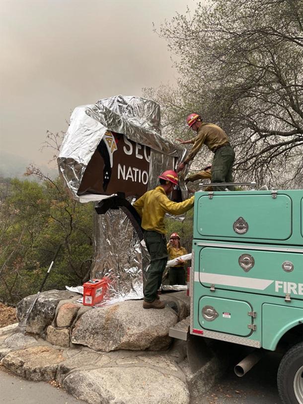 В Калифорнии горят реликтовые секвойи - их пытаются спасти огнеупорными одеялами (ФОТО) 11