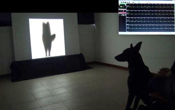 Ученые расшифровали сигналы собак, машущих хвостом