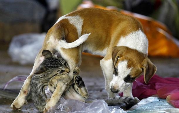 Социологи: На западе Украины больше любят собак, а на востоке - кошек