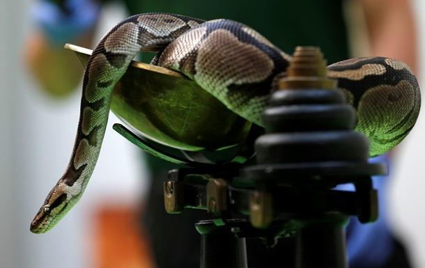 Массаж со змеями. В Индонезии предлагают необычный способ снятия стресса