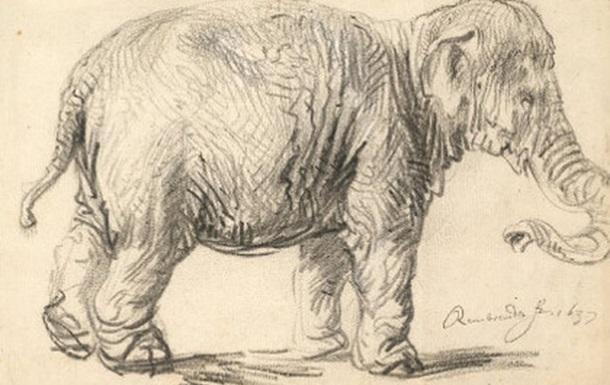 Рисунок Рембрандта оказался лектотипом индийского слона
