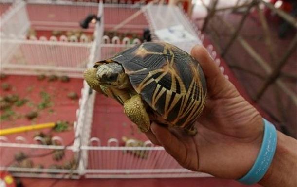 В аэропорту Бангкока нашли чемоданы с сотнями редких черепах