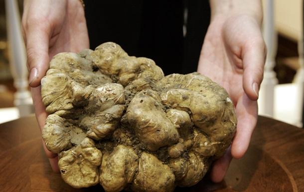 Золотой гриб. Аукцион трюфелей в Италии принес 234 тысячи евро
