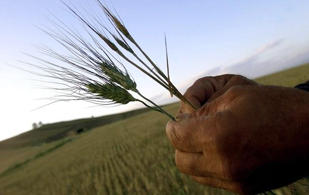Украина сократила посевы озимых зерновых, недовыполнив план