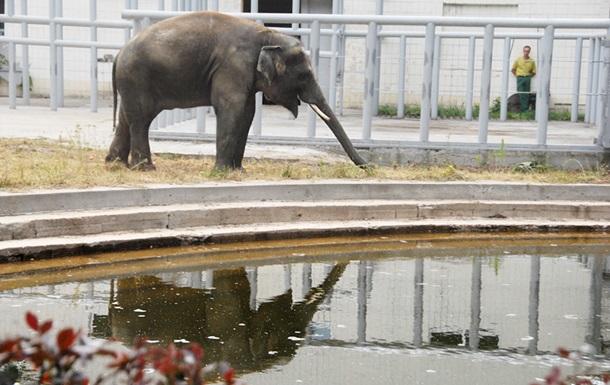 В воскресенье вход в киевский зоопарк для студентов будет бесплатным
