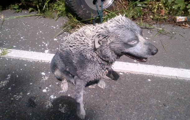 В России полицейский, спасая собаку, убил человека и ранил еще пятерых