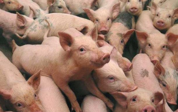 Пять ошибок владельцев, из-за которых животноводческий бизнес терпит убытки