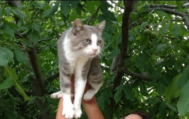 На юге Украины живёт кот-однофамилец одной из известных поп-звёзд
