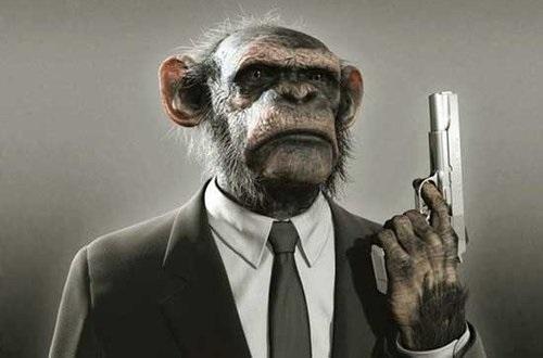 Про тролів та мавп українського суспільства